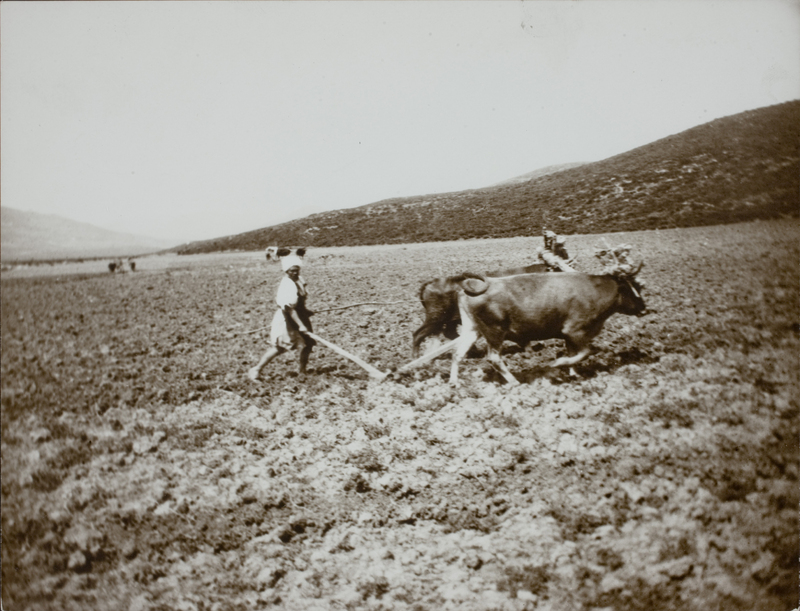 Person plowing field with cattle, 1891