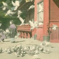 1365. Hachiman Temple, Kamakura