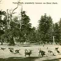 1485. Nara Park, popularly known as Deer Park