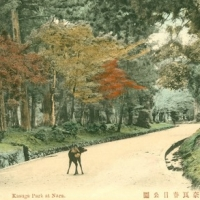 1487. Kasuga Park at Nara