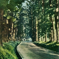 3101. Nikko National Park: Nikko High Way