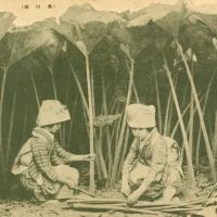 2710. Cutting giant butterbur plants in Akita