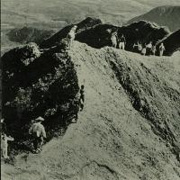 2222. National Park, Mt. Daisies