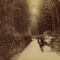 1982. Bamboo Avenue, Kyoto, Japan (1896)