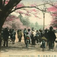 2436. Cherry blossoms, Uyeno Park, Tokyo