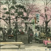 2354. Cherry Blossom at Uyeno Park Tokyo